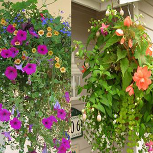 Two hanging baskets, one with purple flowers and one with orange flowers.